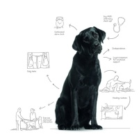 The Dementia Dog project, by Alzheimer Scotland, Glasgow School of Art and Dogs for the Disabled