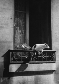 Paris, 1926, Dog out of Window