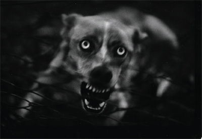 From Giacomo Brunelli's series The Animals